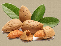 almond - die Mandel - Prunus dulcis