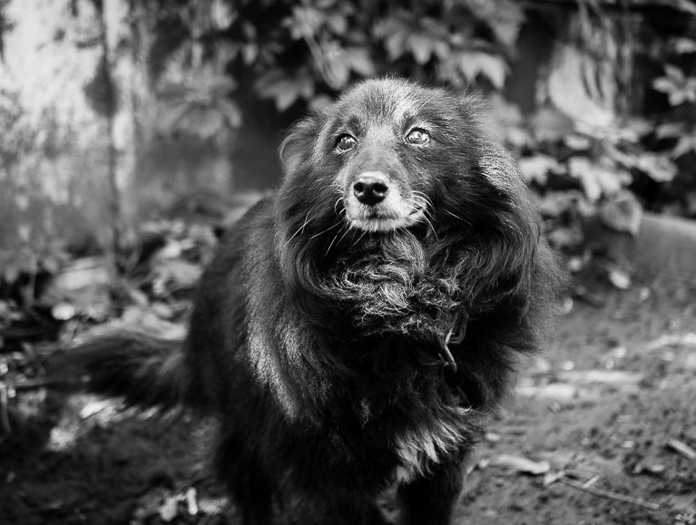 Фотографии собаки в чёрно - белом цвете