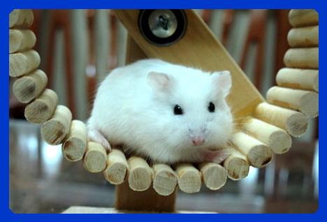 Vị trí thích hợp để đặt chuồng cho hamster