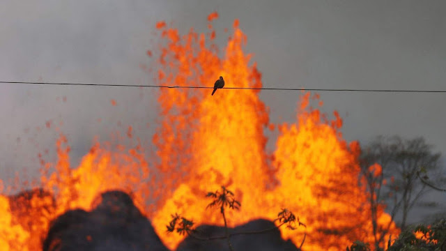 A bird rests on a wire as lava from a Kilauea volcano fissure erupts on Hawaii's .