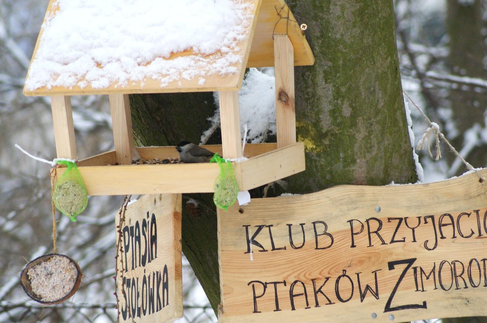 Klub Przyjaciół Ptaków Zimorodek 2012