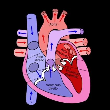 Diabetes emedicina aorta ascendente dilatada