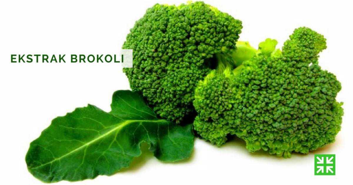 Bisnis Fkc Syariah - Ekstrak Brokoli