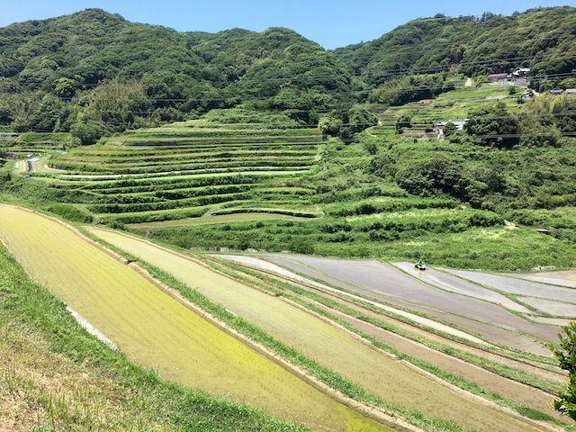 淡路島長沢の棚田