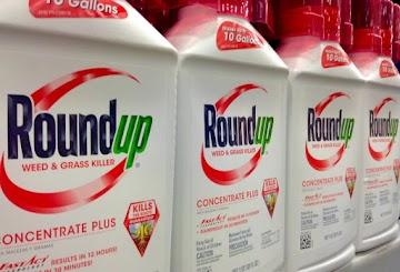 Análise de documentos da Monsanto mostram o risco de câncer por glifosato
