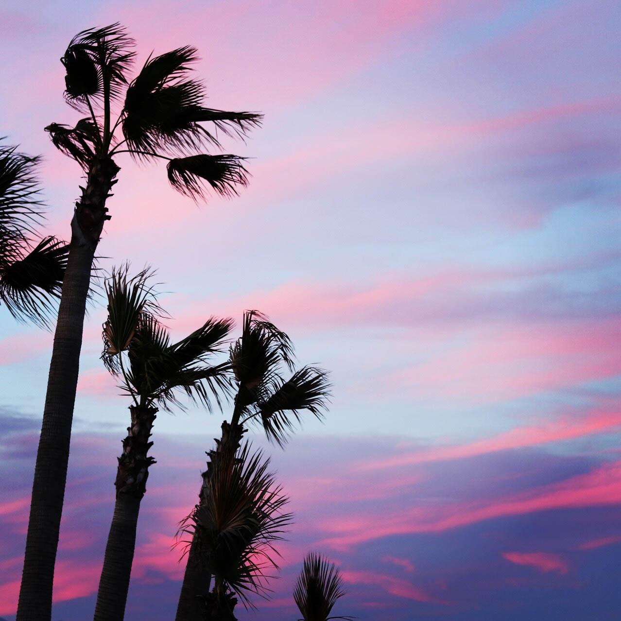 Sunset Spain Palm Trees