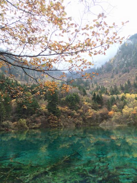 Những gốc cây mục dưới đáy hồ ở Cửu Trại Câu.