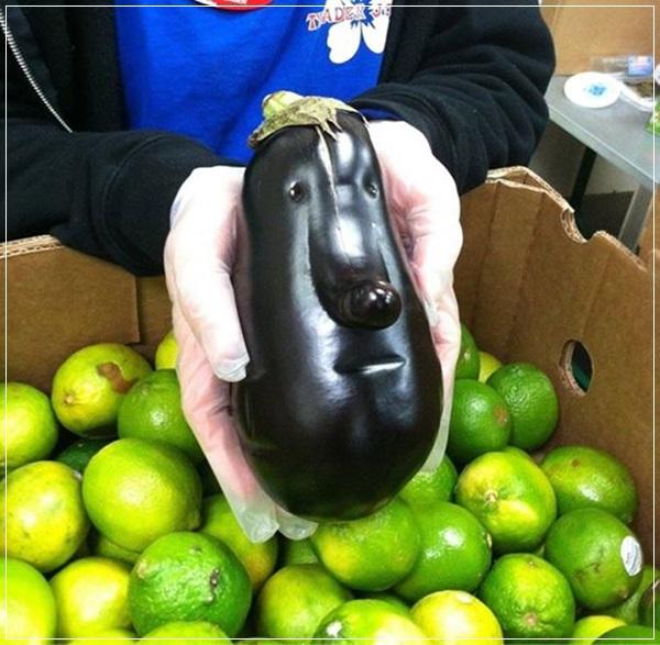 Beringela com forma de rosto humano
