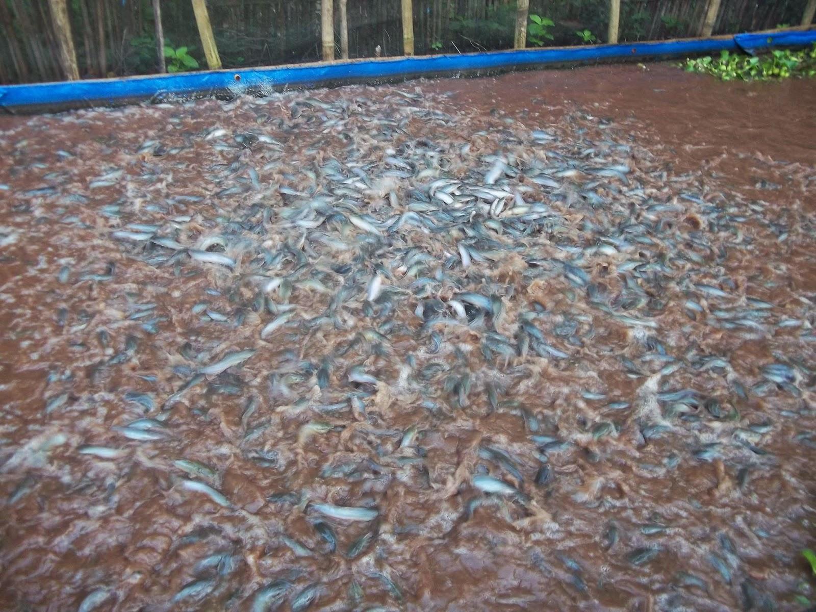 Image Result For Harga Wiremesh Untuk Kolam Bundar