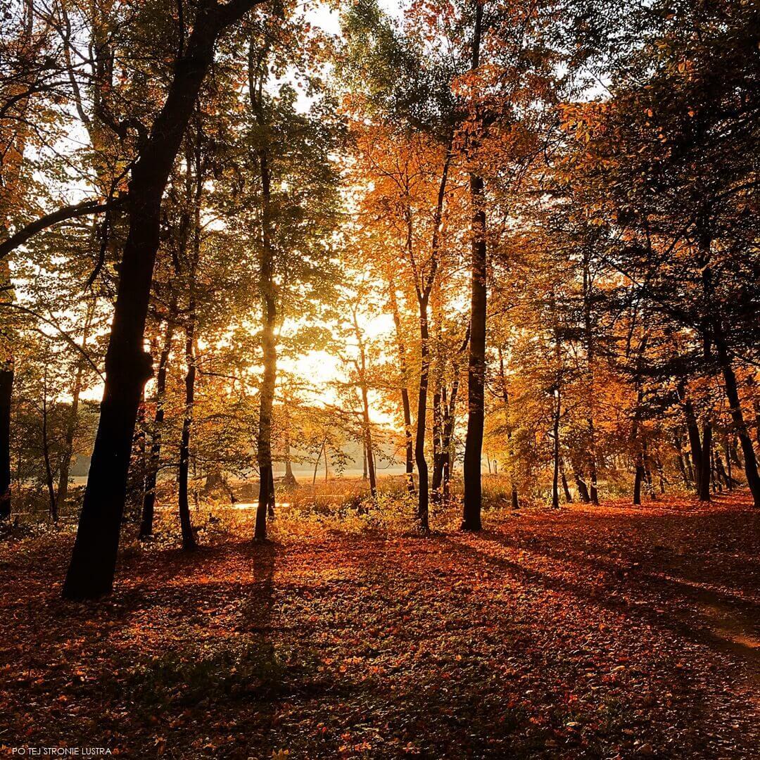 jesienny zachód słońca w parku