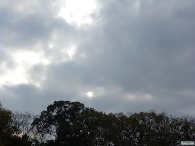 藤田邸跡公園太陽
