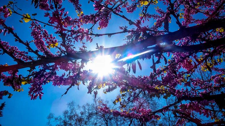 Καιρός: Ήλιος και τοπικές βροχές για την παραμονή της 25ης Μαρτίου