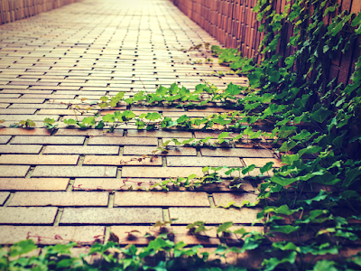 cegły, brukowana ulica, Powstanie Warszawskie, godzina W, 17:00, I LO, II druga wojna światowa; źródło: canva