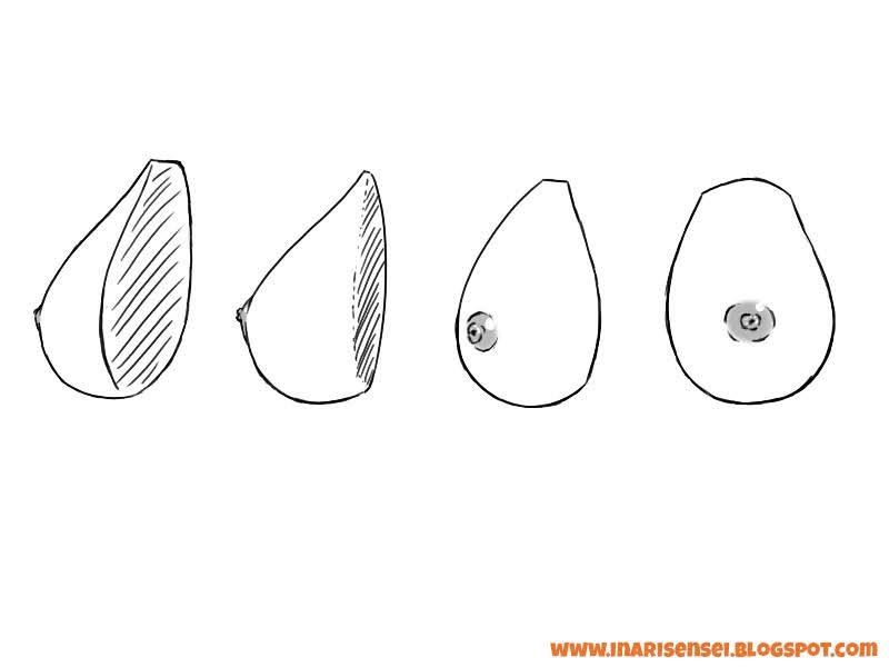 Les différentes orientations du sein selon le positionnement de l'auréole