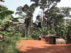 Amenazas bosques tropicales Pueblos indigenas