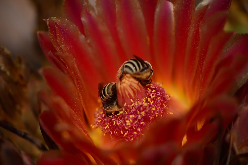 amy myers photography, desert, ferocactus, cactus flower, sonoran, journal, of a thousand things