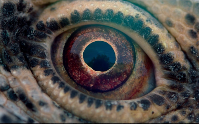 Crítica del documental Voyage of Time: Life's Journey