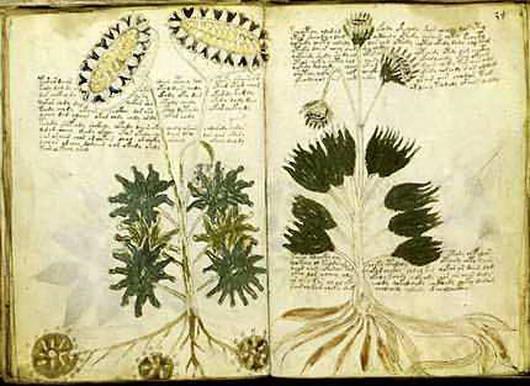 Misteri Naskah Voynich