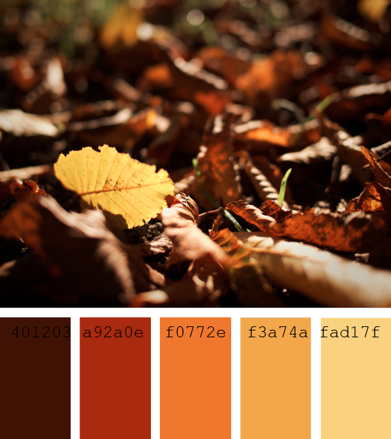 autumn color palettes, dry leaves