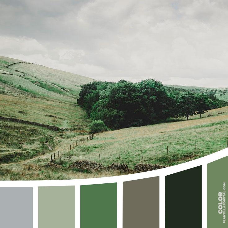 color_440