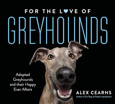 For the love of Greyhounds book by Alex Cearns animal photographer from Houndstooth Studio