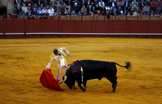 Spanish Bullfight in Seville in Pictures