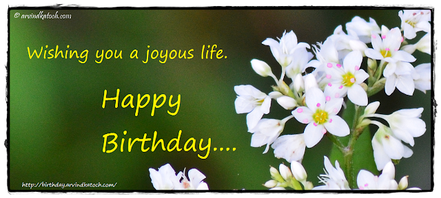 Birthday Card, White Flower, Joyous life, life,