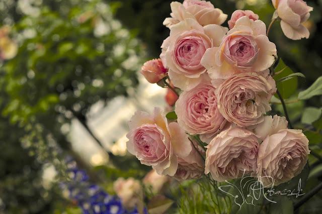 Róże...czyli słów kilka o trudnej miłości