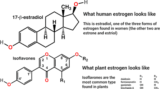 Estrogens From Plants