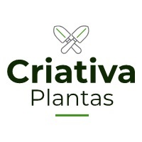 https://criativaplantas.blogspot.com/