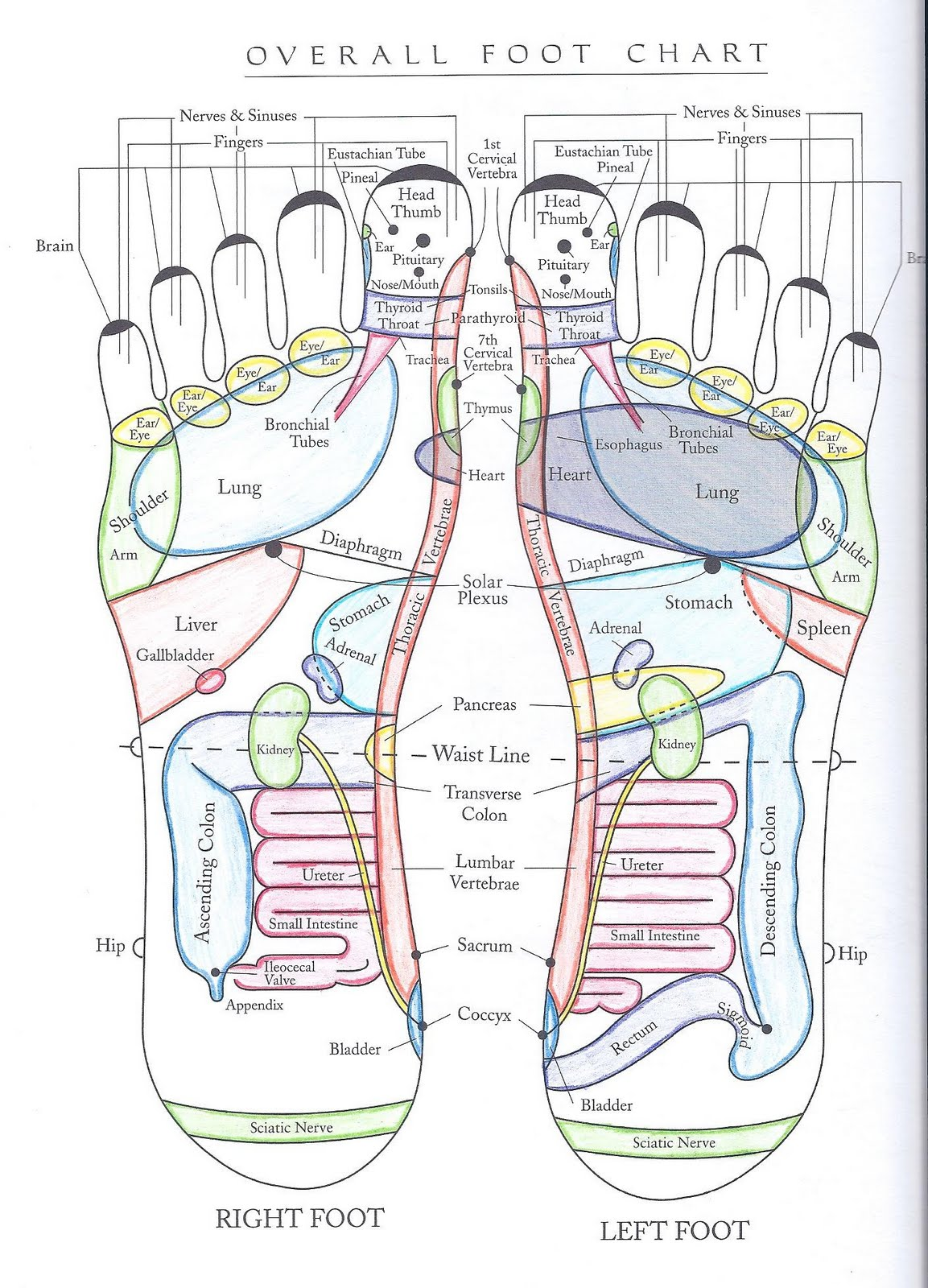 Pressure Points Diagram Massage Symantec Endpoint Protection Architecture Erin Hanson Licensed Therapist Styles