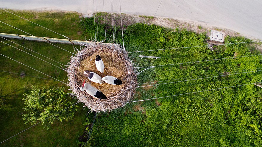 1. 'Birds Eye View' Of Birds In Their Nest, Poland - 12 of The Most Stunning Images Captured By Drones In 2015