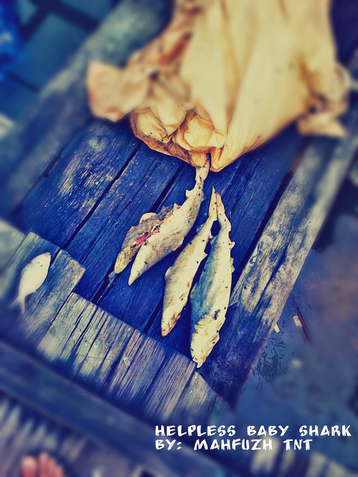 killed baby shark in borneo