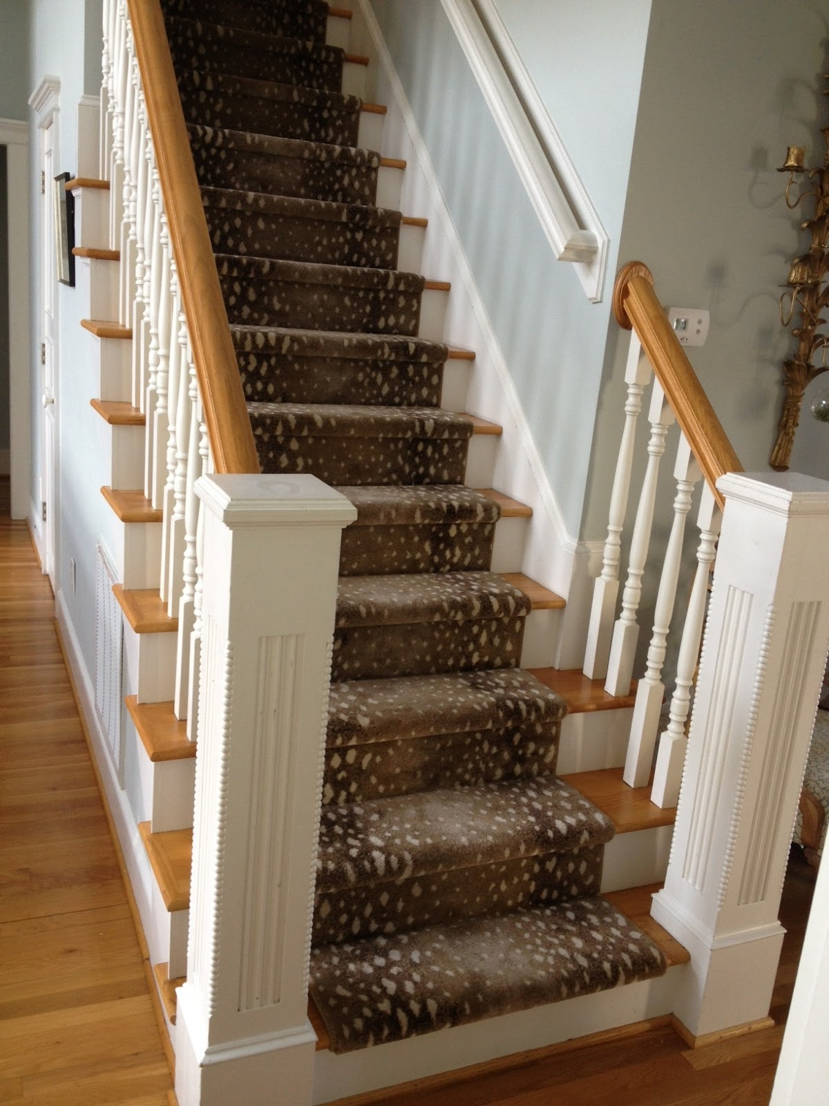 Birds Of A Feather Doctor S Orders   Antelope Carpet On Stairs   Stark   Patterned   Helios   Farmhouse   Foyer