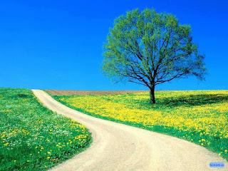 Beautiful Flowar Tree Photos