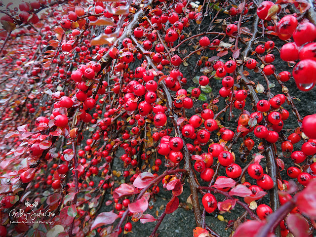 Plant with red berries