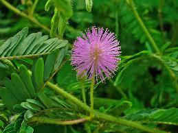 macam - macam gerak pada tumbuhan