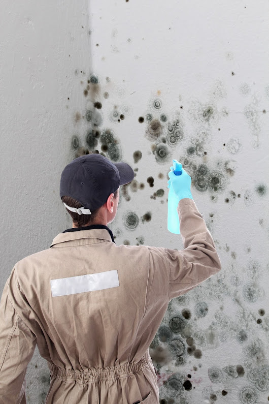The Phoenix Mold Damage Removal Process