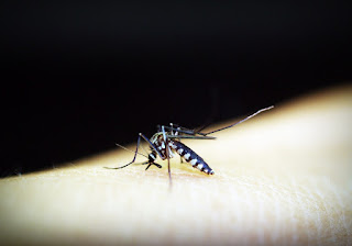 Malaria की लक्षण, कारण,जोखिम,जटिलताओं और निवारण In Hindi