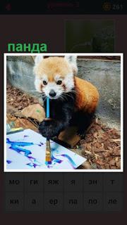 на земле на листе бумаги панда рисует картину кисточкой