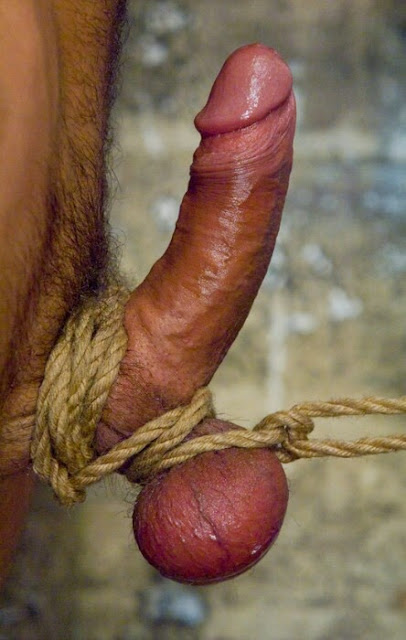 Cock tied