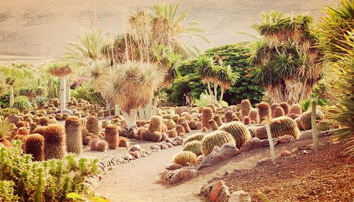 Cuidados del cactus