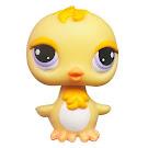 Littlest Pet Shop Pet Pairs Chick (#2419) Pet