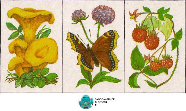 Карточки игра СССР. Игра Шесть картинок Г. Крюкова 1986, Игра природа, растения, лес, грибы, птицы, цветы, ягоды  СССР.