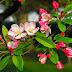 صور وخلفيات زهور فصل الربيع 2018 خلابة - beautiful landscape for spring HD