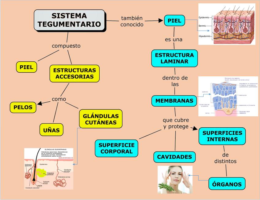 BIOLOGIA 7C KHAROLYN CALLE: biologia