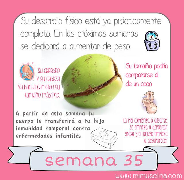 blog mimuselina tu bebe semana a semana 35 feto fruta bebé comparativa tamaño coco