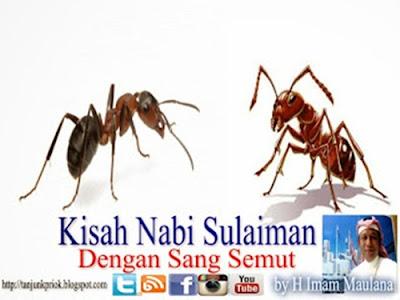 http://dayahguci.blogspot.com/2017/03/3-nasehat-seekor-semut-kepada-nabi.html