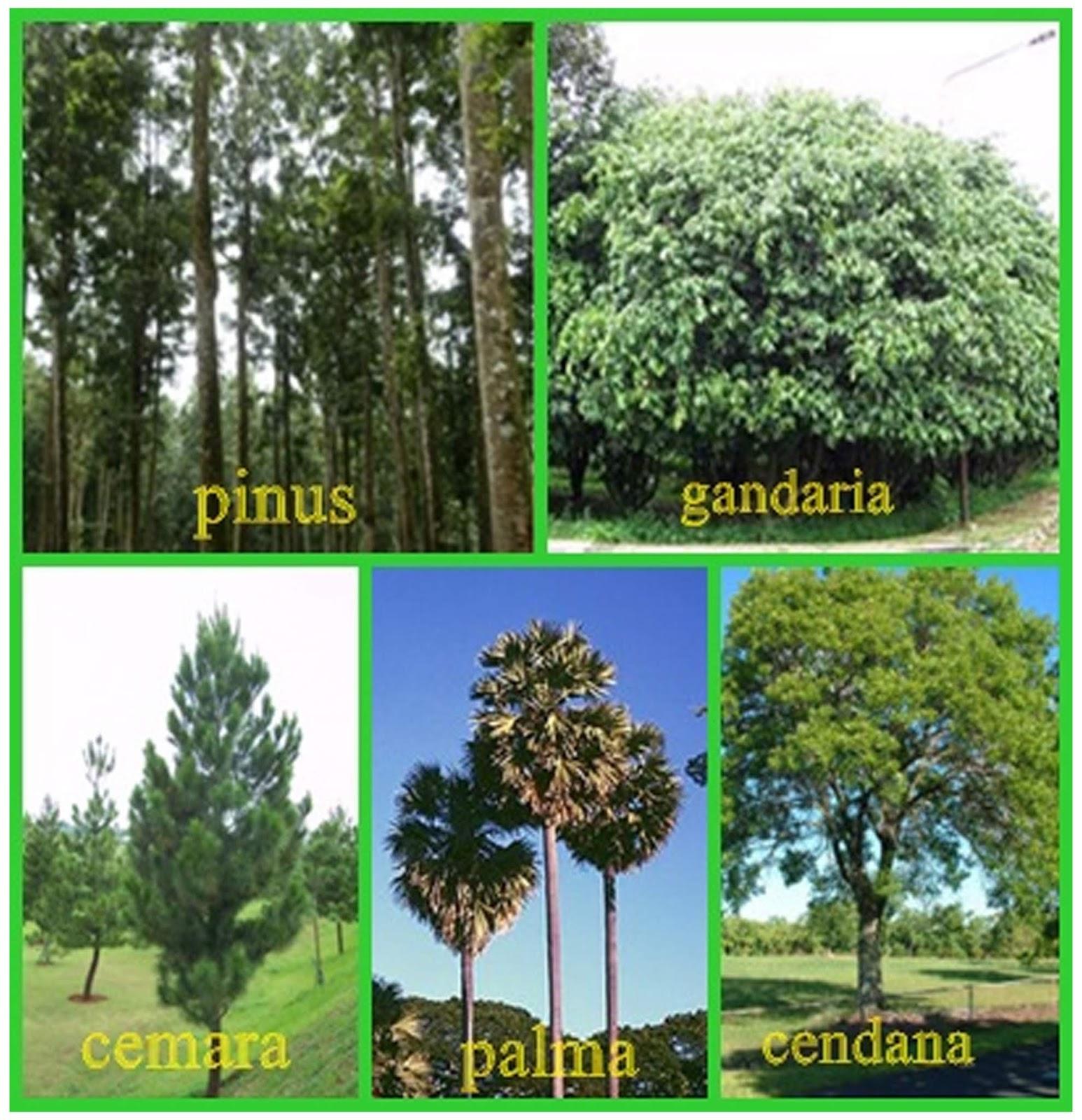 91 Gambar Flora Peralihan Di Indonesia Terbaru