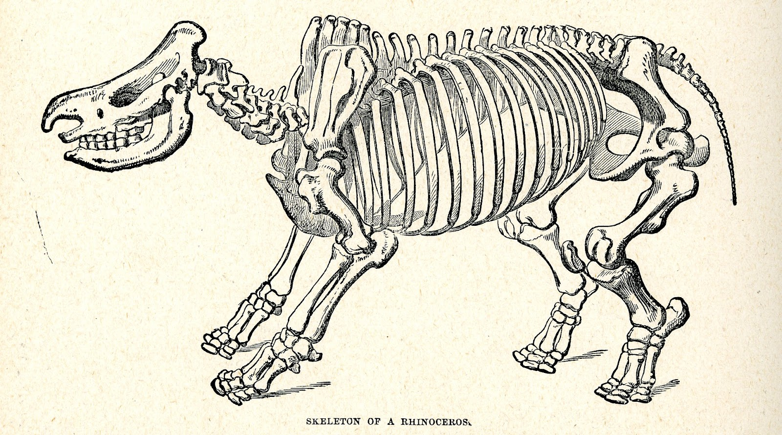 Vintage Technology Obsessions Rhinos Illustrated In The